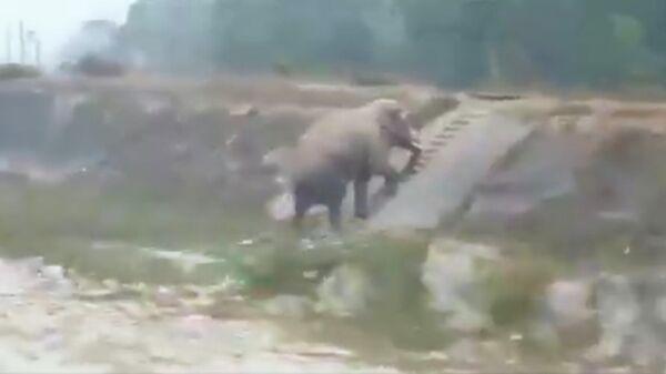 Стоп-кадр видео, поднимающегося по лестнице слона