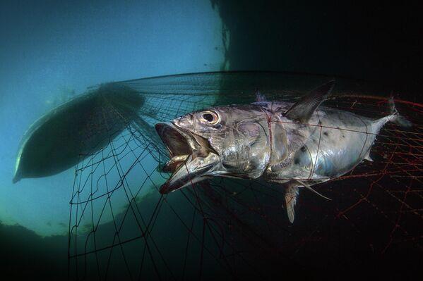 Pasquale Vassallo. Работа победителя конкурса The Underwater Photographer of the Year 2020
