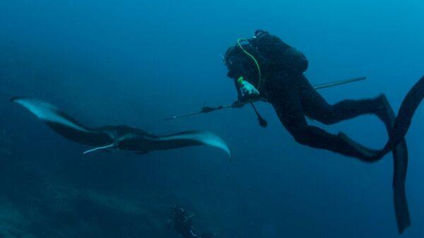 Манты способны нырять на огромную глубину, выяснили ученые