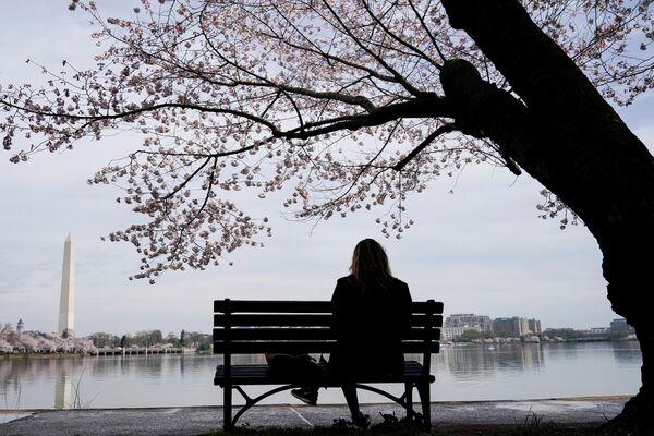 Девушка сидит возле сакуры в Вашингтоне