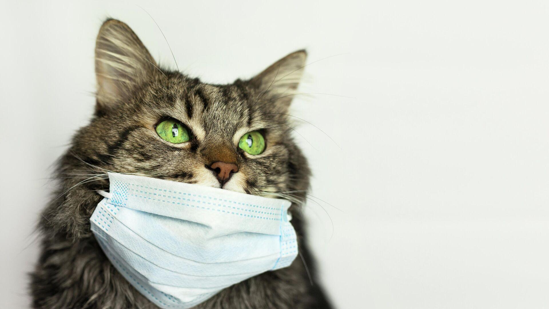 Кошка в маске - РИА Новости, 1920, 05.04.2021