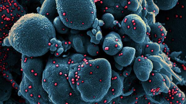 Коронавирус под микроскопом