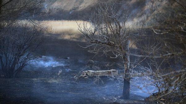 Выгоревший участок после тушения пожара в Тракторозаводском районе Волгограда