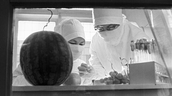 Борьба с эпидемией холеры в Астрахани. Бактериологический анализ овощей и фруктов в городской лаборатории