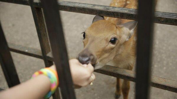Посетитель кормит питомца зоопарка Лимпопо