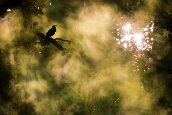 Работа фотографа Jan Piecha, победителя в категории Студия Природы в фотоконкурсе GDT Nature Photographer of the Year 2020