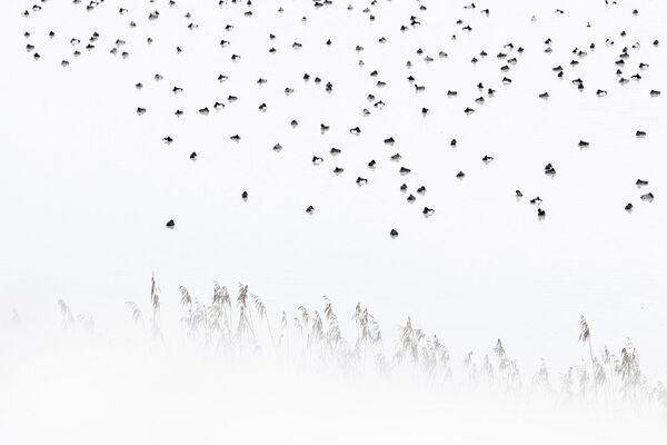 Работа фотографа Christoph Kaula в категории Птицы в фотоконкурсе GDT Nature Photographer of the Year 2020