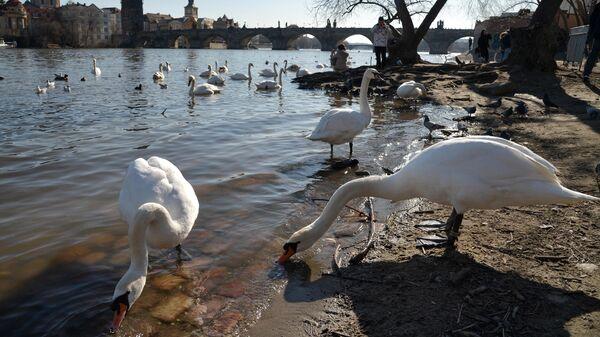 Берег реки Влтава в Праге