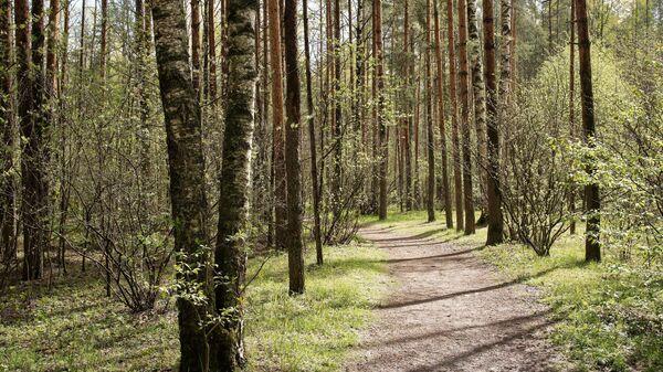 Деревья в парке Сосновка в Выборгском районе Ленинградской области
