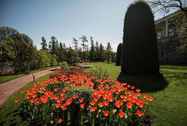 Фрейлинский садик в Царскосельской императорской резиденции Царское село