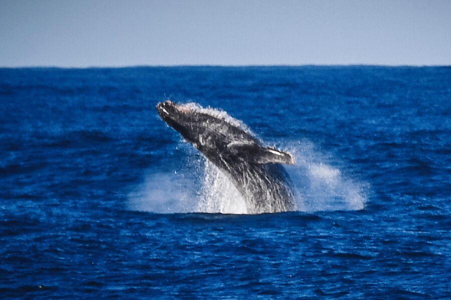 Горбатый кит в районе острова Аделейд во время плавания к антарктической станции Беллинсгаузен