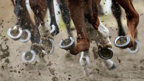 Лошади на ипподроме Челмсфорд-Сити в Челмсфорде, Англия