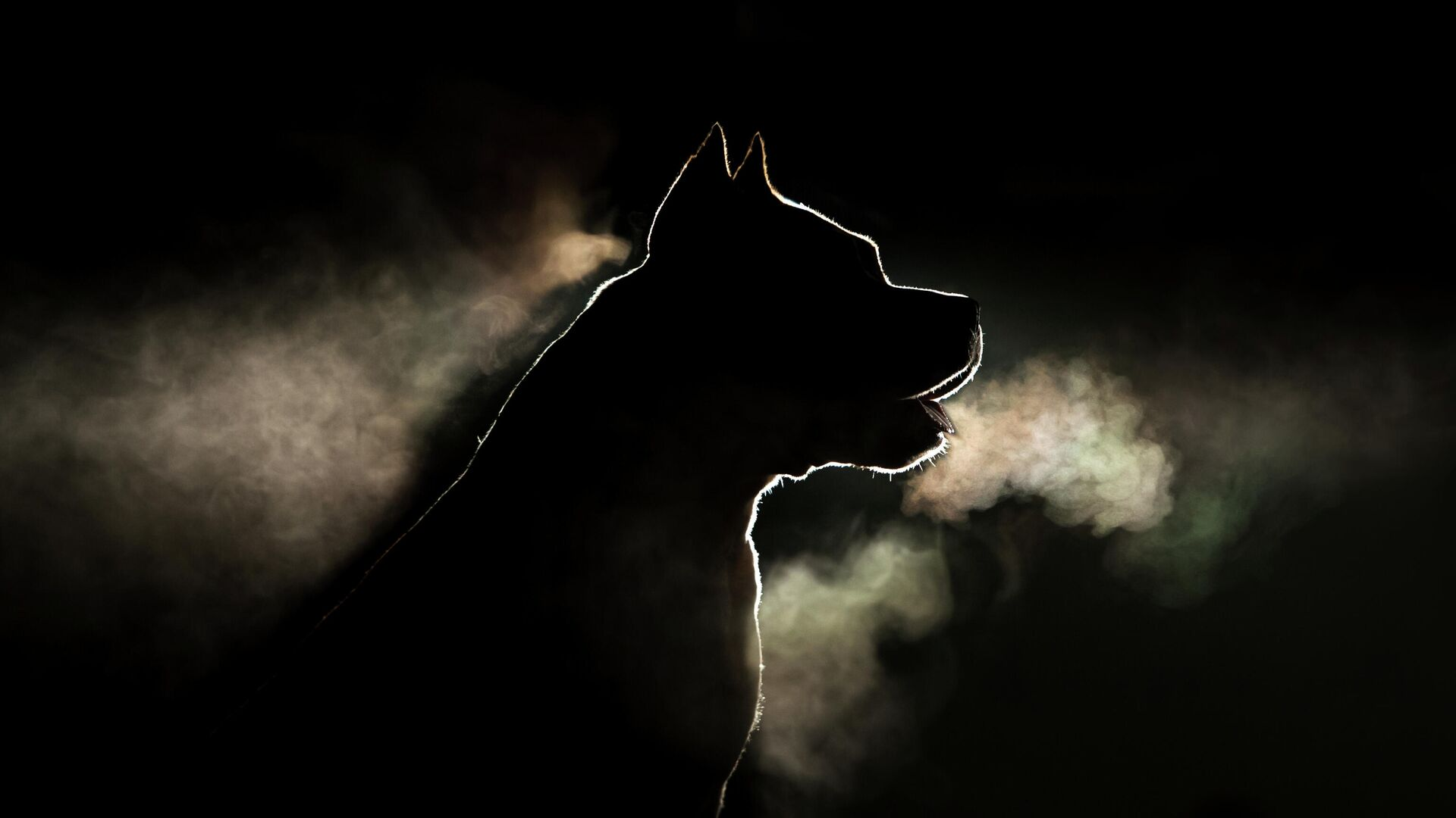 Собака порды стафордширский терьер - РИА Новости, 1920, 01.06.2021