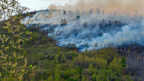 Гидрометцентр предупредил об опасности лесных пожаров в Сибири
