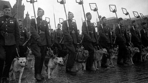 Минеры с собаками минно-разыскной службы на Параде Победы на Красной площади 24 июня 1945 года