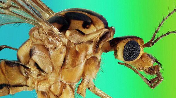 Экстремально резкий и детальный портрет комара-долгоножки, автор: Retro Lenses