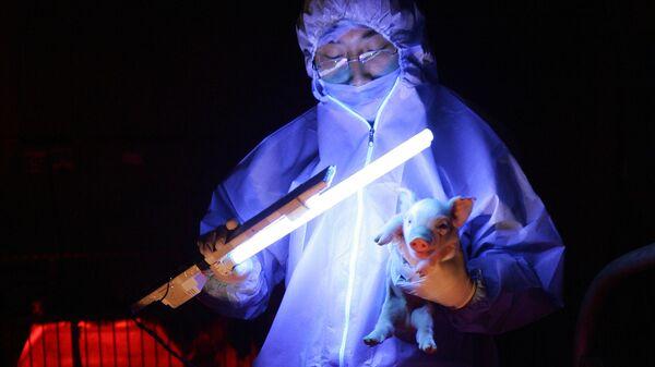 Китайские ученые обнаружили штамм гриппа, способный вызвать пандемию