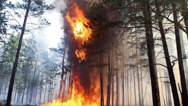 В УПЦ собирают средства для пострадавших от лесных пожаров на Луганщине