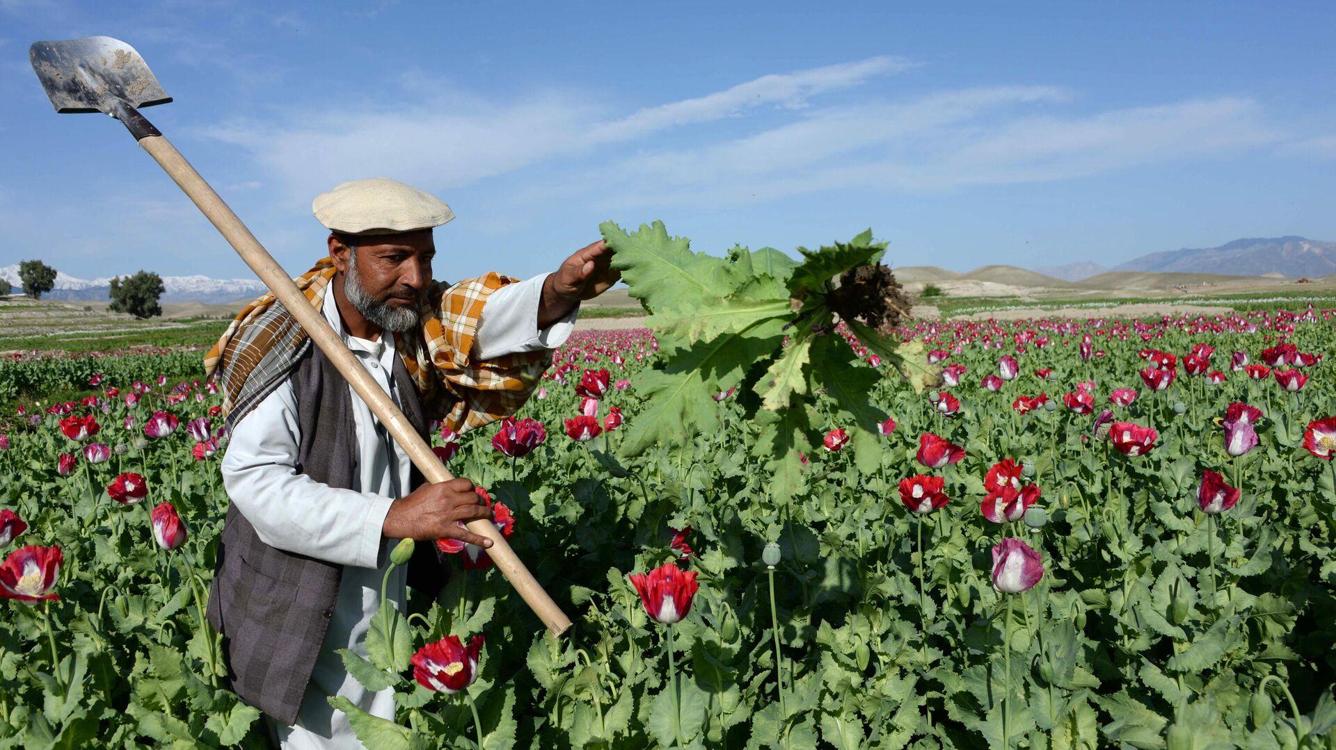 Наркотики, налоги и таинственные спонсоры. Откуда у талибов миллиарды