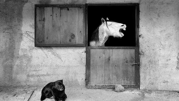 Mehmet Aslan. Работа участника конкурса Comedy Pet Photo Awards 2020