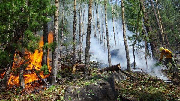 Сотрудники ФБУ Авиалесоохрана во время тушения лесного пожара на территории Забайкальского национального парка Заповедное подлеморье в Республике Бурятия. Стоп-кадр видео
