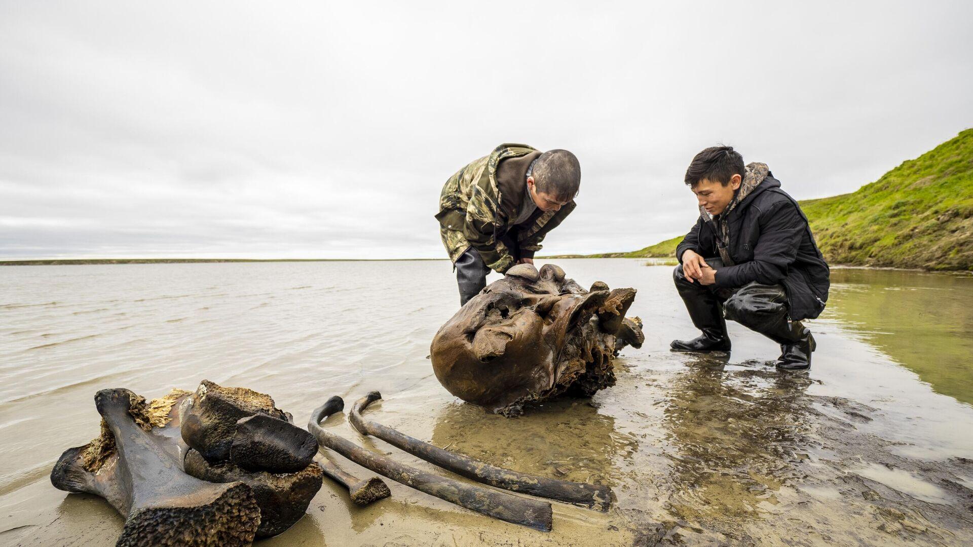 Фрагменты костей взрослого мамонта времен палеолита, обнаруженные в ходе археологических раскопок на территории Ямало-Ненецкого округа - РИА Новости, 1920, 23.08.2021