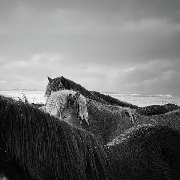 Xiaojun Zhang. Работа победителя конкурса iPhone Photography Awards 2020