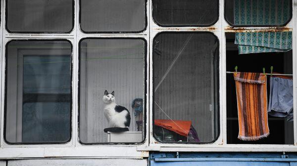 Кошка на балконе жилого дома
