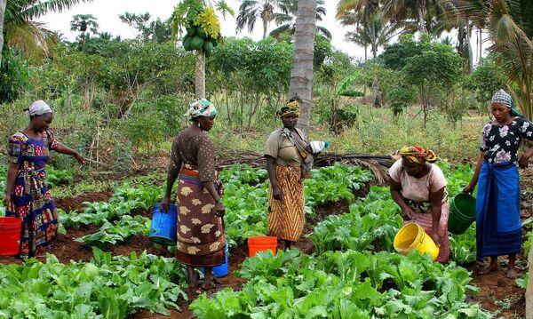 Женщины на ферме в Танзании