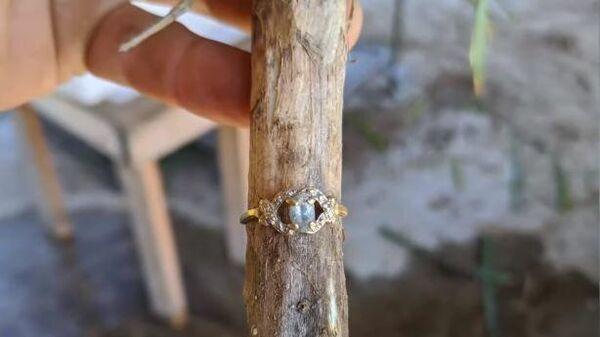 Кольцо на стебле чеснока. Стоп-кадр видео