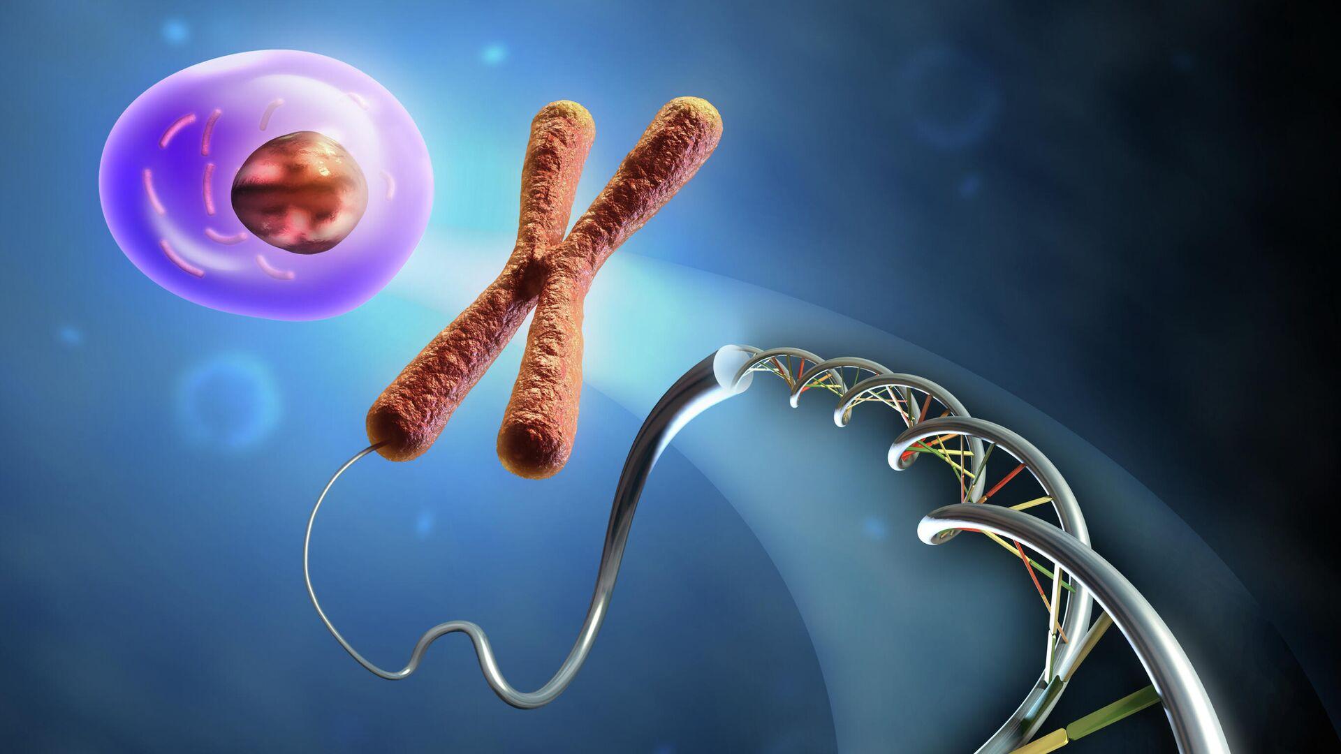 Образование клетки из ДНК и хромосом - РИА Новости, 1920, 26.11.2020