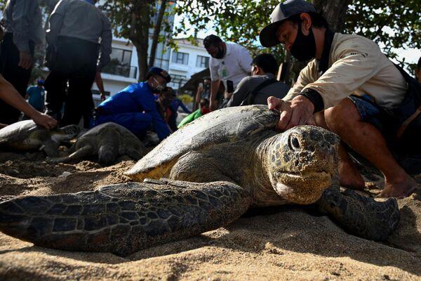 Люди готовятся выпустить морских черепах на пляже Кута на Бали