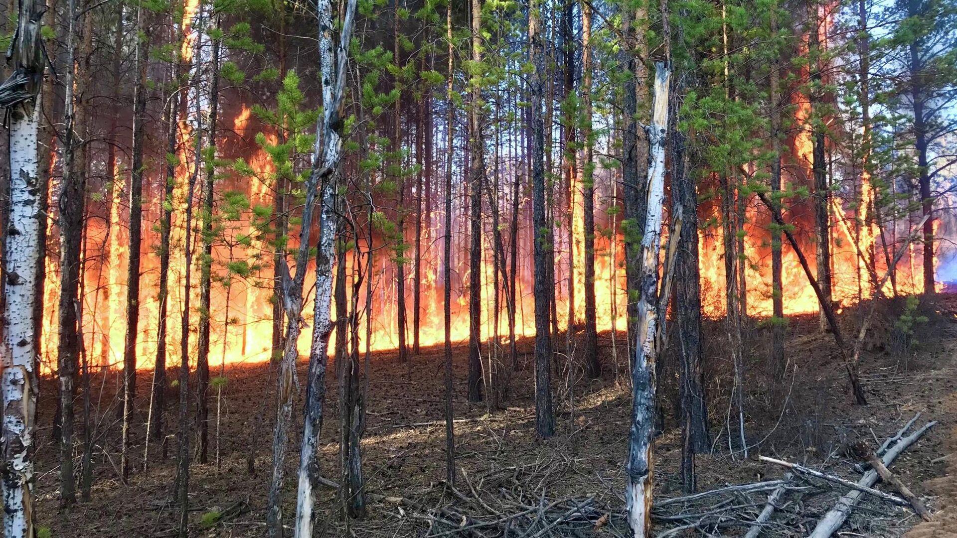 Лесные пожары на территории Якутии - РИА Новости, 1920, 07.10.2020