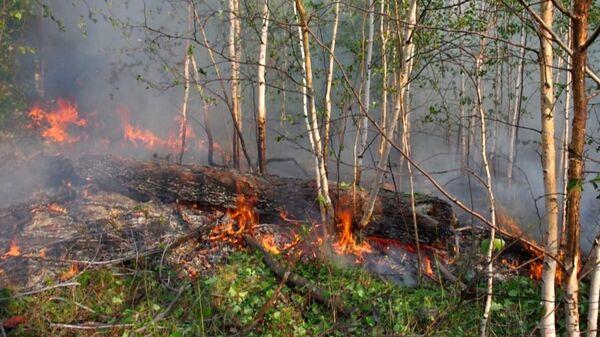 Лесной пожар в Якутии