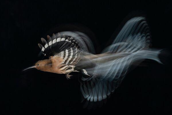 Gadi Shmila. Работа победителя конкурса Bird Photographer of the Year 2020