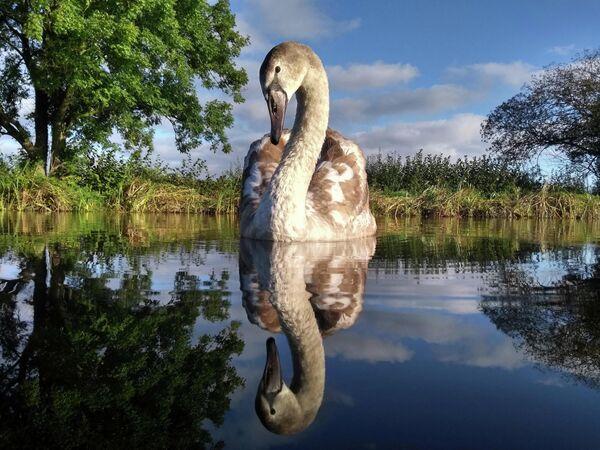 Adam Lake. Работа победителя конкурса Bird Photographer of the Year 2020