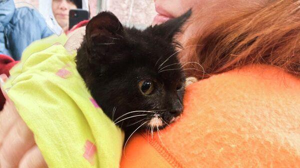 Спасенный котенок в Петропавловске-Камчатском