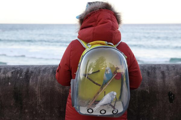 Женщина несет попугаев в рюкзаке в Сиднее