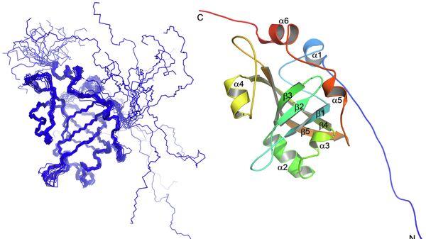Структура белка Est3 — компонента теломеразы термофильных дрожжей Hansenula polymorpha