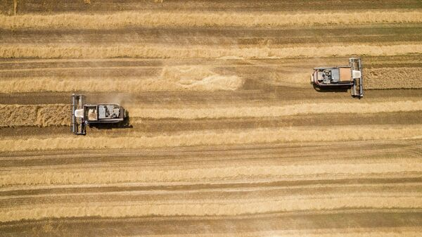 Уборка пшеницы на полях