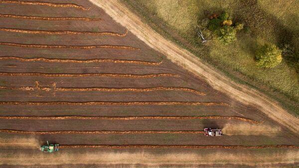Уборка урожая гречки на полях фермерского хозяйства в Алтайском крае