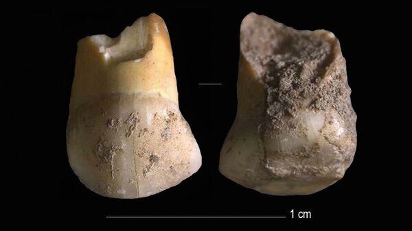 Верхний молочный клык принадлежал ребенку-неандертальцу в возрасте 11 или 12 лет