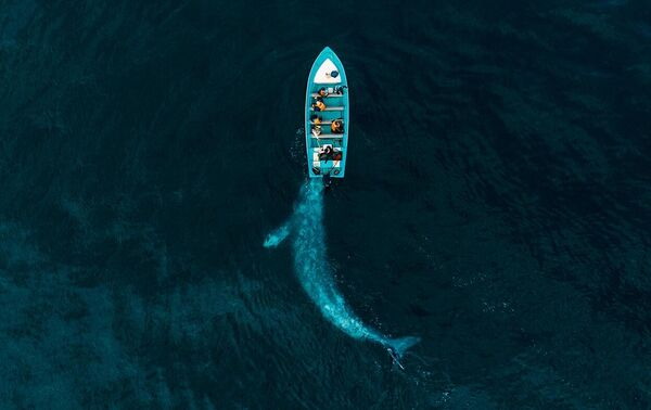 Joseph Cheires. Работа победителя конкурса Drone Photo Awards 2020