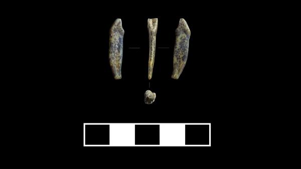 Зубы неандертальцев, найденные в Чагырской пещере