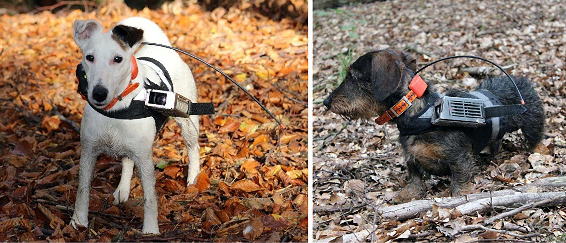 Собаки умеют ориентироваться по магнитному полю Земли - РИА Новости, 1920, 25.09.2020