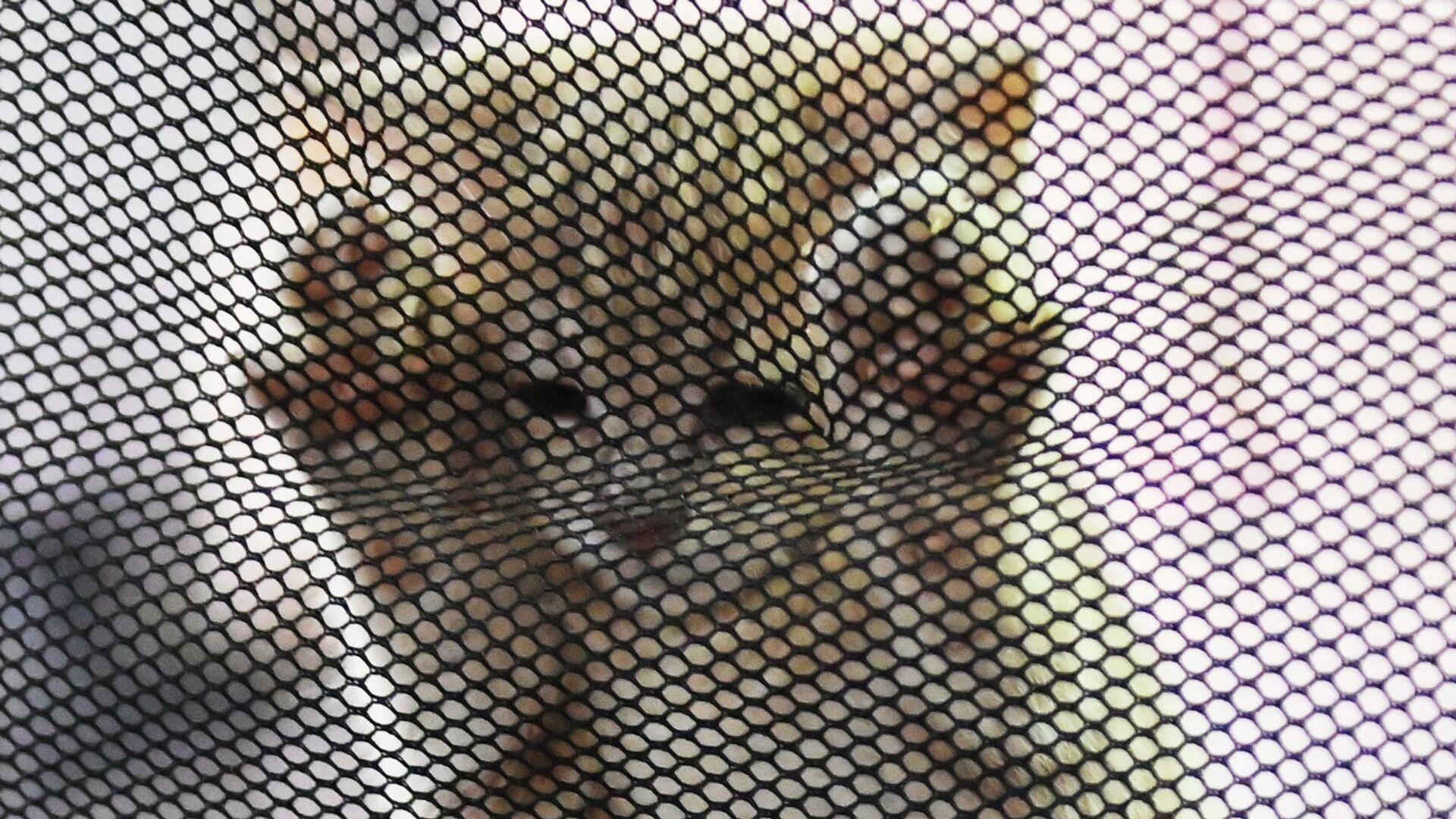 Котенок в переноске на выставке КоШарики Шоу в Сокольниках - РИА Новости, 1920, 28.10.2020