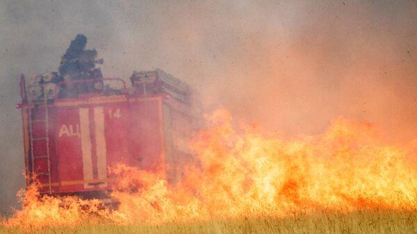 Сотрудники МЧС РФ на месте лесного пожара в Воронежской области