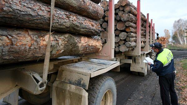 Инспектор ГИБДД осматривает лесовоз, гружёный необработанной древесиной, так называемым кругляком, в городе Лесосибирске