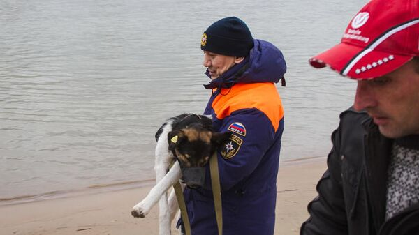 Сотрудник МЧС держит спасенную собаку