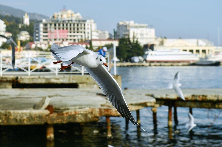 Чайка на набережной Ялты